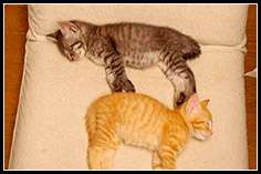 Коты играют в тетрис